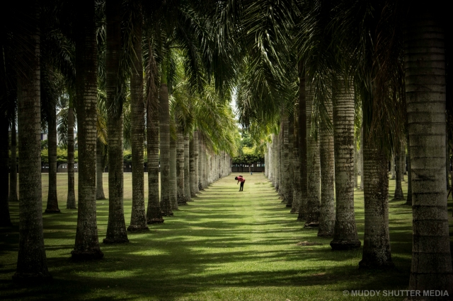 Lady in Palm Trees
