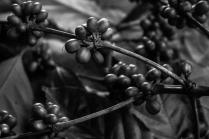 dominican-republic-b_w-small-prints-15