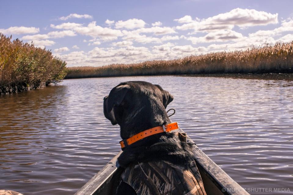 duck_hunting-fishing_bay_wma-26-of-27