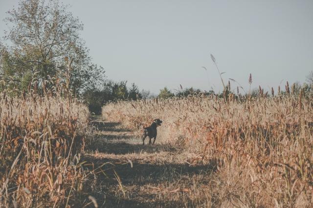 pheasant_hunting_rosehill_2016-21-of-73