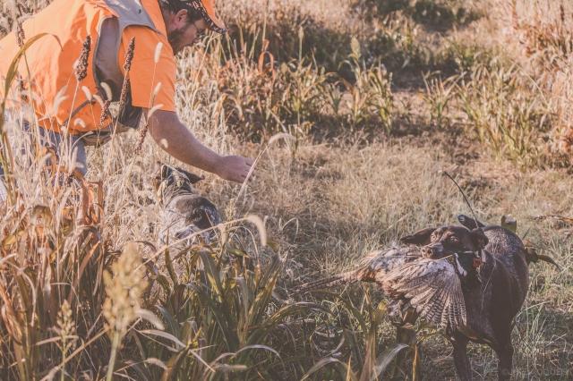pheasant_hunting_rosehill_2016-28-of-73