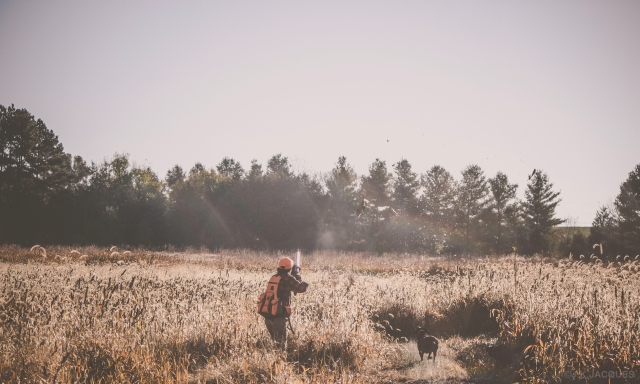 pheasant_hunting_rosehill_2016-39-of-73