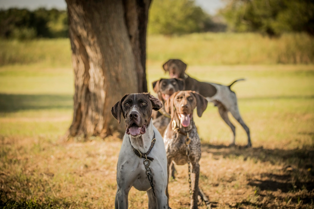NO_LIMITS_KENNELS_2017_7_27 (117 of 215)