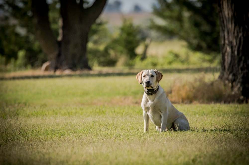 NO_LIMITS_KENNELS_2017_7_27 (147 of 215)