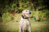 NO_LIMITS_KENNELS_2017_7_27 (163 of 215)