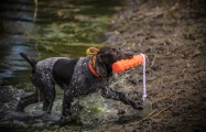 NO_LIMITS_KENNELS_2017_7_27 (166 of 215)