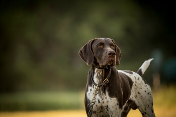 NO_LIMITS_KENNELS_2017_7_27 (17 of 215)