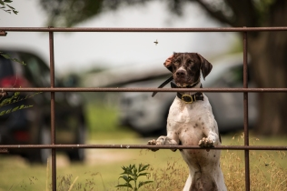 NO_LIMITS_KENNELS_2017_7_27 (174 of 215)