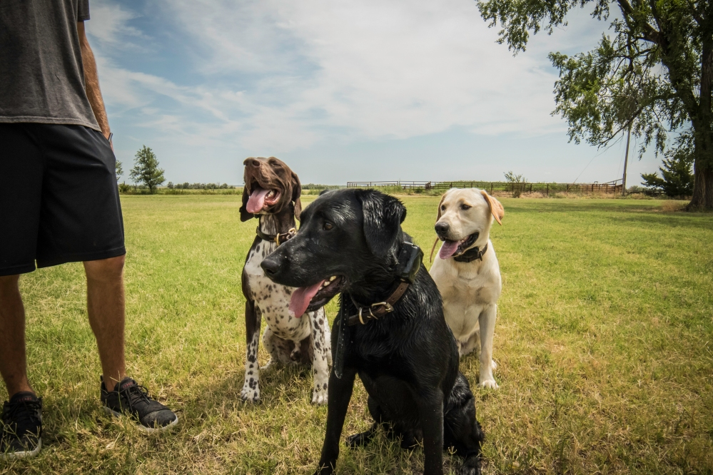 NO_LIMITS_KENNELS_2017_7_27 (199 of 215)