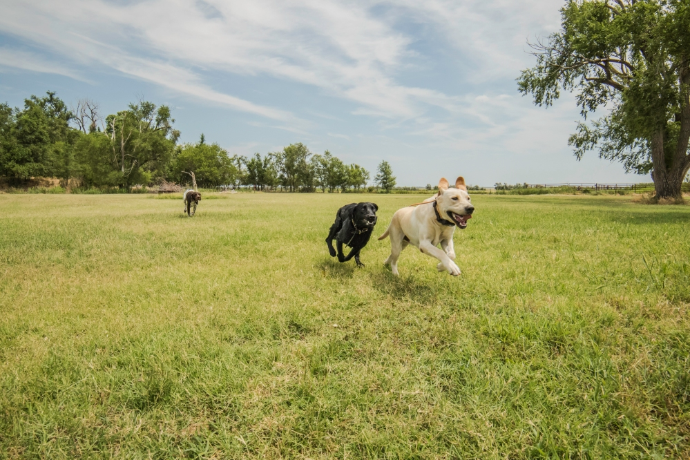 NO_LIMITS_KENNELS_2017_7_27 (205 of 215)