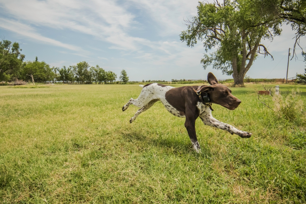 NO_LIMITS_KENNELS_2017_7_27 (214 of 215)