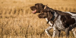 NO_LIMITS_KENNELS_2017_7_27 (30 of 215)