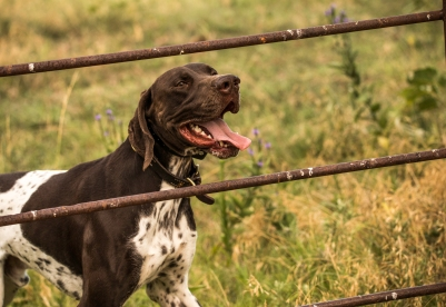 NO_LIMITS_KENNELS_2017_7_27 (8 of 215)